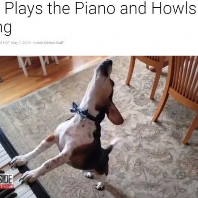 """【海外発!Breaking News】ピアノを弾いて歌う犬""""バディ・マーキュリー"""" フレディに負けないパフォーマンス(米)<動画あり>"""