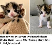 【海外発!Breaking News】体重が76g、へその緒がついたまま発見された仔猫 元気に生後1か月を迎える(米)