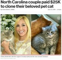 【海外発!Breaking News】270万円のクローン猫、亡き猫と「眠る場所から性格まで同じ」と飼い主が歓喜(米)