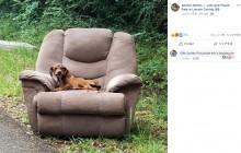 【海外発!Breaking News】投棄されたソファーに座り飼い主を待ち続ける子犬(米)