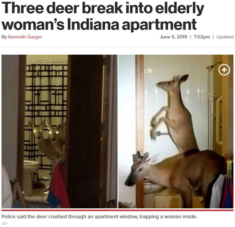室内でやりたい放題の鹿(画像は『New York Post 2019年6月5日付「Three deer break into elderly woman's Indiana apartment」(AP)』のスクリーンショット)