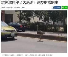 【海外発!Breaking News】ペットのダチョウが脱走 時速70キロで車道を駆け抜ける(台湾)