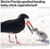 【海外発!Breaking News】タバコのポイ捨てが招いた悲劇 餌と間違え吸い殻をひなに与える親鳥(米)