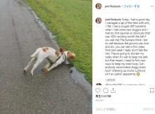 【海外発!Breaking News】興奮するとバッタリ倒れてしまう犬、SNSで人気に 治療費集まる(英)<動画あり>
