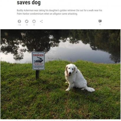 【海外発!Breaking News】噛まれた犬を救うため、2メートル級のワ二と格闘した75歳男性(米)