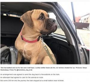 【海外発!Breaking News】「もう飼えない」飼い主に拒絶されるも、200キロ歩き戻ろうとした犬(露)<動画あり>