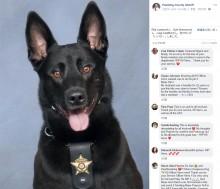 【海外発!Breaking News】犯人と間違えて保安官に飛び掛かった警察犬、その場で射殺(米)