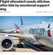 【海外発!Breaking News】アメリカン航空CA、セラピー犬に噛まれ左手を5針縫う怪我
