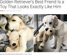 【海外発!Breaking News】自分そっくりのぬいぐるみと「いつも一緒」の犬(オランダ)<動画あり>
