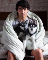 【イタすぎるセレブ達】ジョー・ジョナス&ソフィー・ターナー、愛犬が事故死 ショック受けセラピーへ