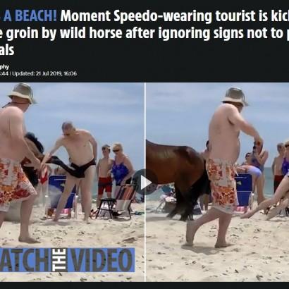 【海外発!Breaking News】野生馬に触った男性 急所を足蹴りされる(米)<動画あり>