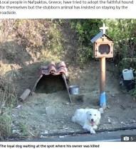 【海外発!Breaking News】飼い主を亡くした犬 事故現場を探し出し18か月もその場を動かず(ギリシャ)