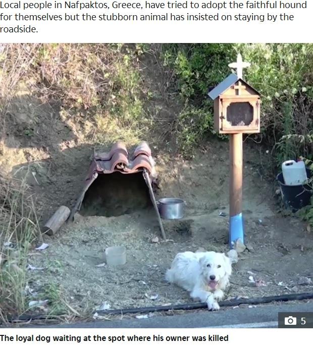 亡き飼い主を待ち続ける犬(画像は『The Sun 2019年7月16日付「MAN'S BEST FRIEND Devoted dog 'refuses to move from spot where owner was killed in car crash 18 months ago after locals try and take him in'」』のスクリーンショット)