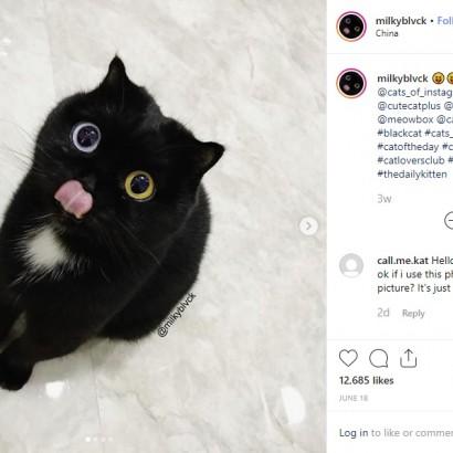 【海外発!Breaking News】オッドアイの黒ネコ「瞳に吸い込まれそう」「ぬいぐるみみたい」と大人気に(中国)<動画あり>