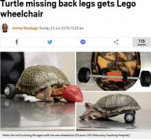 【海外発!Breaking News】後ろ足を失ったカメ、レゴの車輪で自由を取り戻す(米)<動画あり>
