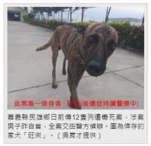 【海外発!Breaking News】「農作物を荒らされ腹が立った」農家の男、犬12匹を毒殺(台湾)