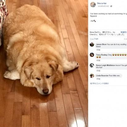 【海外発!Breaking News】安楽死のため病院に持ち込まれた肥満犬、45キロの減量成功(カナダ)
