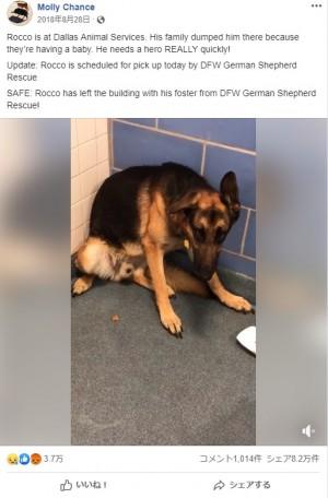 【海外発!Breaking News】「子供が生まれるから」と捨てられた犬、悲し気な姿に里親が殺到(米)<動画あり>