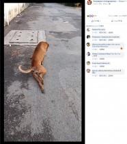 【海外発!Breaking News】食べ物が欲しくて? 脚を怪我したふりをする野良犬(タイ)<動画あり>