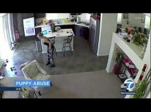 【海外発!Breaking News】ペットシッター、生後10週の犬を床に叩きつける姿が監視カメラに(米)<動画あり>
