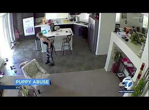 キッチンの様子を捉えた監視カメラの映像(画像は『ABC7 2019年8月6日公開 YouTube「Video shows pet sitter throw puppy on floor at Victorville home」』のサムネイル)