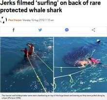 【海外発!Breaking News】ジンベエザメの上でポーズ ガイドと旅行者に非難殺到