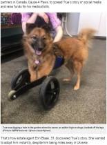 【海外発!Breaking News】ドラッグ依存者に前脚を切断された犬、新たな飼い主の愛情受ける(カナダ)