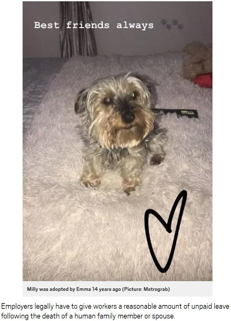 飼い主の女性が4歳の時から飼っていた犬(画像は『Metro 2019年8月16日付「Grieving dog owner sacked for taking day off after pet died」(Picture: Metrograb)』のスクリーンショット)