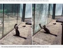 【海外発!Breaking News】動物園のサル、尖った石を使ってガラスを割る(中国)<動画あり>