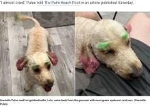 【海外発!Breaking News】トリミングサロンで蛍光色に染められた犬、飼い主は激怒(米)