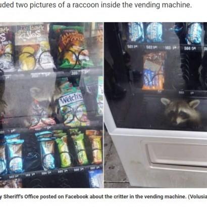 【海外発!Breaking News】自動販売機に入り込んだアライグマ、保安官らに救出される(米)<動画あり>