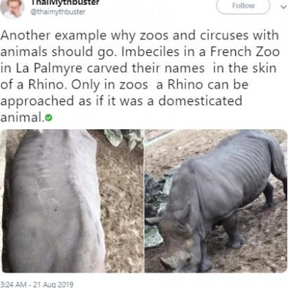 【海外発!Breaking News】動物園を訪れた客 サイの背中に爪で自分の名前を刻む(仏)