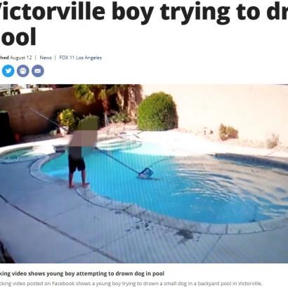 【海外発!Breaking News】ペットシッターが連れて来た8歳孫 犬をプールに投げ入れ水中に沈める(米)