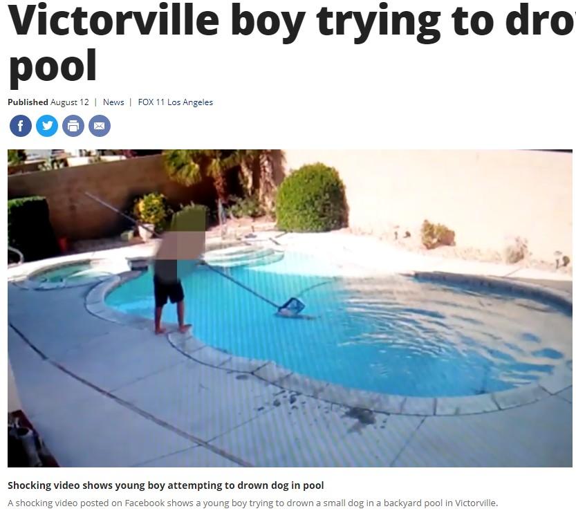 犬をプールに沈める男児(画像は『FOX 11 Los Angeles 2019年8月12日付「Shocking video captures young Victorville boy trying to drown dog in pool」』のスクリーンショット)