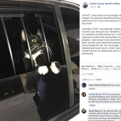 【海外発!Breaking News】強盗と勘違いされ拘束された猫 「無実」を訴えるような姿が人気に(米)