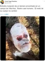 「不機嫌そうな人間の顔」を持つ子牛が物議醸す(アルゼンチン)<動画あり>