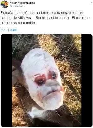 【海外発!Breaking News】「不機嫌そうな人間の顔」を持つ子牛が物議醸す(アルゼンチン)<動画あり>