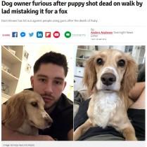 【海外発!Breaking News】「キツネだと思った」散弾銃を持った若者が散歩中の犬を射殺(英)