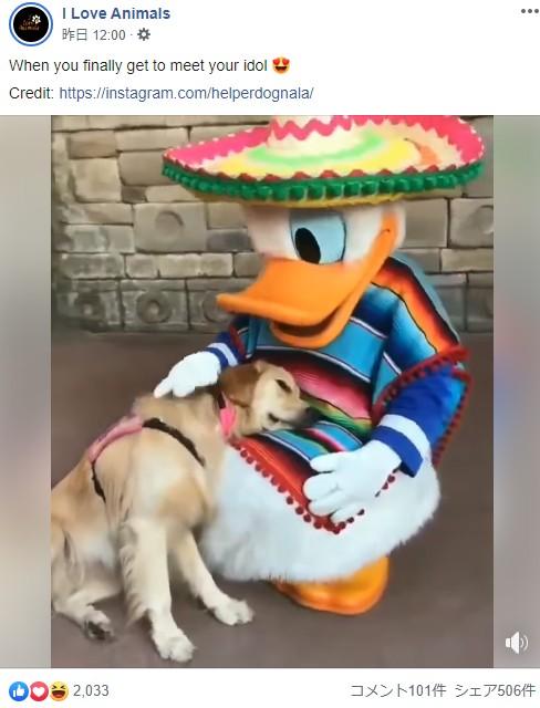 ドナルドダックが大好きな介助犬(画像は『I Love Animals 2019年9月21日付Facebook「When you finally get to meet your idol」』のスクリーンショット)