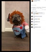 【海外発!Breaking News】「世界で最も愛らしい殺人鬼」チャッキーの衣装着た犬の動画再生回数2900万回超(香港)<動画あり>