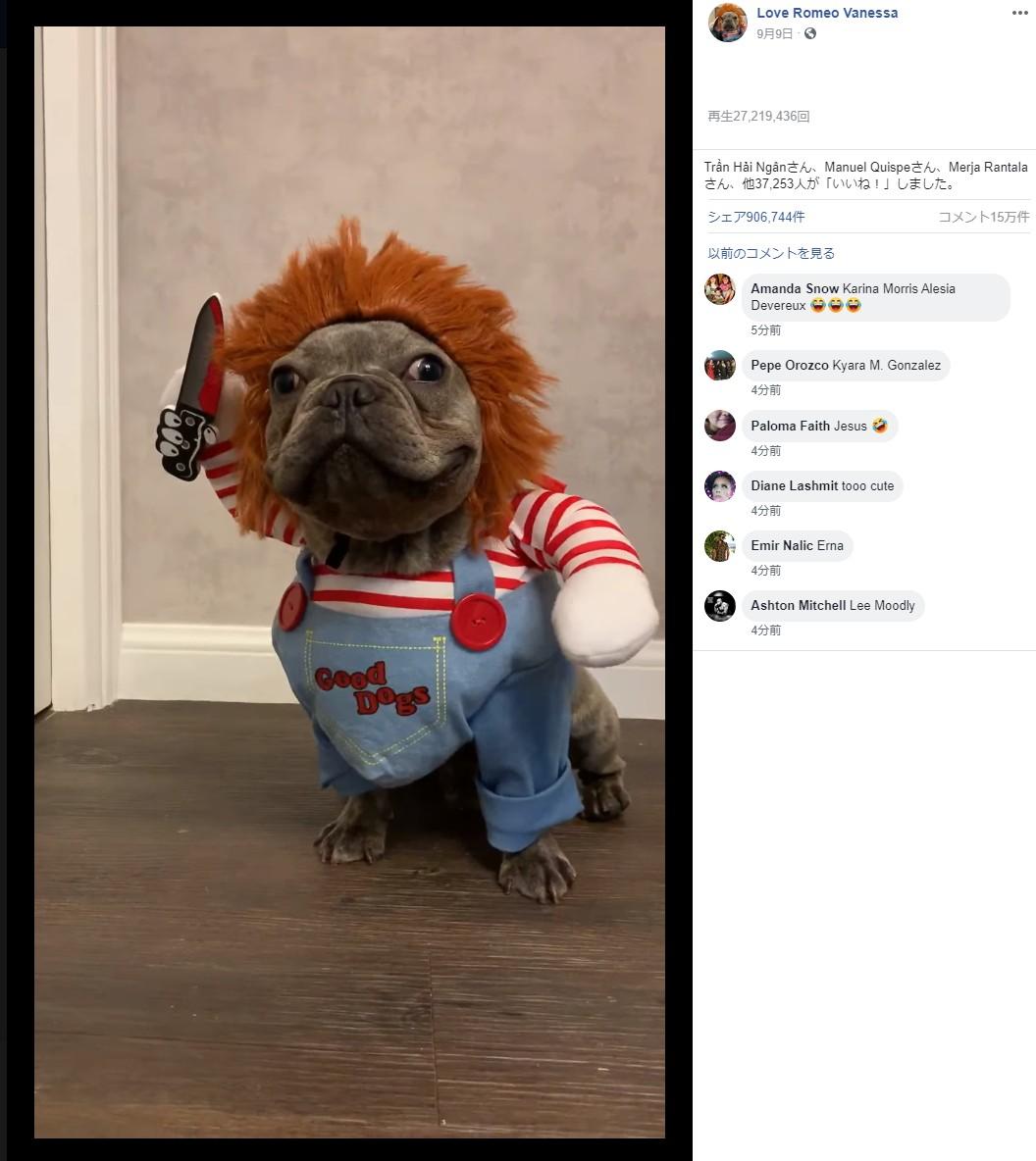 フレンチブルドッグが殺人人形・チャッキーに!(画像は『Love Romeo Vanessa 2019年9月9日付Facebook「燈燈燈燉 繼上次7月14 Annabelle之後,下個月Halloween嘅造型就係CHUCKY」』のスクリーンショット)