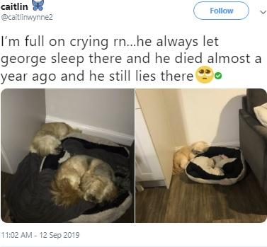 """【海外発!Breaking News】「ベッドは空けておくね」1年前に""""親友""""を亡くし床の上で寝る犬(英)"""