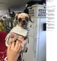 【海外発!Breaking News】18センチの爪と4キロの毛の塊 飼育放棄された犬が第2の人生を歩み出す(米)