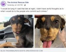 【海外発!Breaking News】爆竹で顎を吹き飛ばされた犬「こんなに辛い経験をしても人間を信頼しようと」(米)