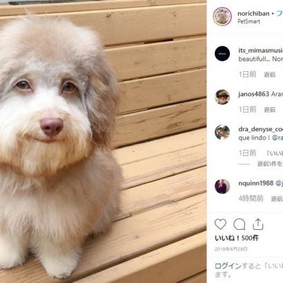 【海外発!Breaking News】アーモンド形の目を持つ「人間のような顔」をした犬がSNSで人気に(米)
