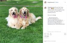 【海外発!Breaking News】盲目のゴールデン・レトリバー、妹犬がガイドに 「2頭はかけがえのない友達」(米)<動画あり>