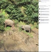 【海外発!Breaking News】子ゾウを助けようとして転落か 滝底でゾウ6頭の死骸見つかる(タイ)