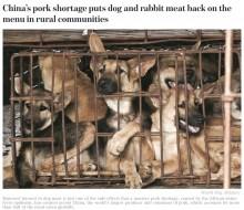 【海外発!Breaking News】アフリカ豚コレラの影響 中国農村部の飲食店で「豚肉の代わりに」犬肉が登場