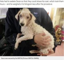 【海外発!Breaking News】飼育放棄された犬 片目摘出に17本抜歯も新しい家族が見つかる(英)