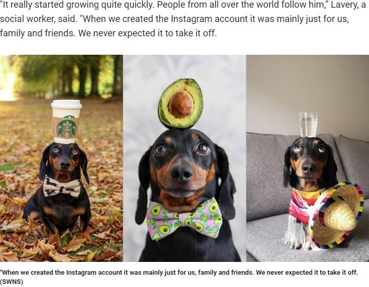 頭に様々なものを載せてバランスをとるダックスフント(画像は『Fox News 2019年10月12日付「Dog becomes Instagram-famous for balancing objects on his head」(SWNS)』のスクリーンショット)